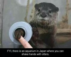 Japan, I'm coming! Gotta get a handshake with their little tiny webbed-fingers! I MUST GO THERE!