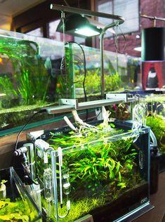 Led lamp aquarium / Lampara led para aquario