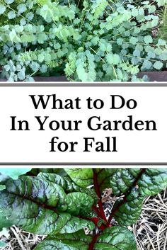 Learn how to prepare your garden for fall growing and how to prepare for the cold winter months ahead!