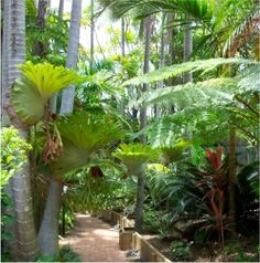 You& love our spacious apartments at Sea Point, Caloundra . Tropical Landscaping, Tropical Garden, Sunshine Coast, Our Love, Vegetable Garden, Murals, Oasis, Apartments, Landscapes