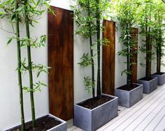Interesting Fence Lining, Raised Garden bed with Bamboo growth.