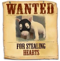WANTED #Bullie