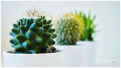 Macro del día: Cactus