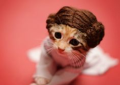 This is too cute. A photographer who rescues cats dresses up her adoptable kittens as movie characters to help find them homes.