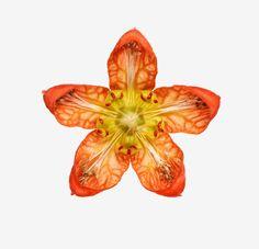111216FL_studio_flower_029.jpg (2000×1930)