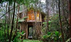 Treehouse Hawaii Airbnb Off-Grid