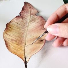 #Details #watercolour #watercolor #painting #gum #leaf #colour #artwork