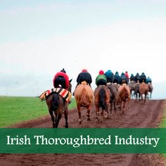The opportunity to experience the thrill of horse racing & racehorse ownership at a very low cost maintaining a direct link with Irish thoroughbred industry Ireland Uk, Racehorse, Thoroughbred, Horse Racing, Patriots, Celtic, Opportunity, Irish, Horses