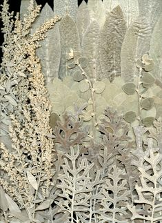 silver dried leaves by horticultural art .an idea for all the silver foliage in your garden Pressed Flower Art, Dry Leaf, Arte Floral, Natural Forms, Botanical Art, Textures Patterns, Dried Flowers, Textile Art, Collage Art