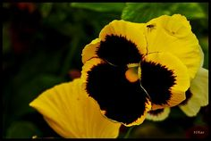 Yellow, black and a bug