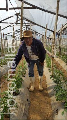 Trellis, The Expanse, Farmer, Plants, Green Houses, Farmers, Plant, Planets