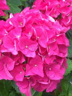 Rose, Garden, Flowers, Plants, Pictures, Photos, Pink, Garten, Lawn And Garden