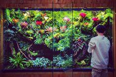 Aquarium Aquascape, Planted Aquarium, Reptile Room, Paludarium, Carnivorous Plants, Terrariums, Fish Tank, Animals And Pets, Orchids