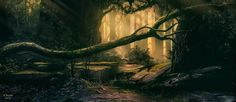 Old Forest A (Patreon IP03) by andreasrocha.deviantart.com on @DeviantArt