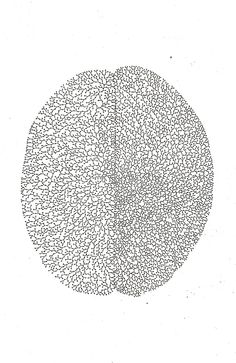 imogencoulter:    synapse