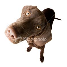 Perplex puppy Royalty Free Stock Photo
