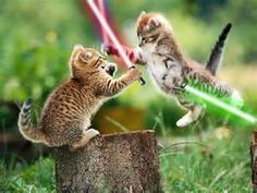Funny cats and cute kittens playing Tier Wallpaper, Funny Cat Wallpaper, Kitten Wallpaper, Animal Wallpaper, Baby Wallpaper, Wallpaper Pictures, Wildlife Wallpaper, Amazing Wallpaper, Unique Wallpaper