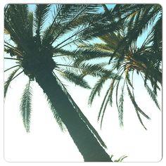 Palms Rhodos