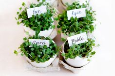 Here's what your sophisticated Easter table needs -- pretty Eggshell Planter Placecards.Thanks to Claudia  @limnandlovely for sharing her how-to with us.