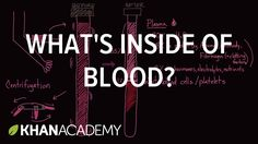 What's inside of blood?   Lab values and concentrations   Health & Medic...