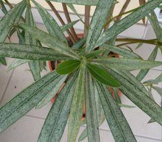 Plant Leaves, Plants, Shape, Plant, Planets