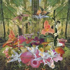 """""""Orchids"""" no sólo juega a las melodías difusas y cansadas, o a los ritmosexóticos que los sureños han visto nacer a lo largo de varios años, sino que también se monta a tope sobre la reinterpretación de canciones. Ahora, ¿qué tanto de esto podría considerarse bueno o malo"""
