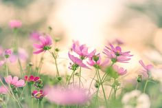 #Spring #Flower #Pictures