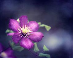 Flower Photography  purple wall art navy blue by CarolynCochrane, $30.00