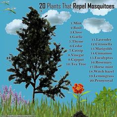 Plants that repel bugs!