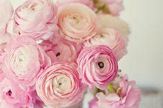 Pink romantic vintage inspired ranunculus baby girls nursery 5x7 fine art photograph photo shabby chic pastel soft wall decor via Etsy