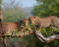Your South Africa Photos -- National Geographic