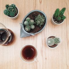 curiouszhi | from the blog: urban jungle bloggers - coffee & plants @ http://wp.me/p48Onh-8h #urbanjunglebloggers #coffee #plants #greenhome #cacti #succulents #hedgehog