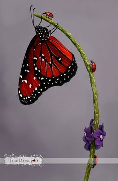 2 Lady Bugs and  a Butterfly