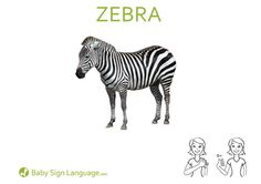 Printable zebra Baby Sign Language Flash card (U. Letter) Printable zebra Baby Sign Language Flash card Size) Usage: Babies just love animals. They especially love more unusual animals like z… Sign Language Phrases, Sign Language Interpreter, Baby Sign Language, Libra, Sign Language For Toddlers, British Sign Language, Baby Zebra, Kids Sleep, Child Sleep