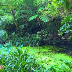 【popikko3】さんのInstagramをピンしています。 《#virginforest #lotus #pond #clearweather #nature #landscape #bios #beautiful #botanicalgarden #forest #okinawa #photooftheday  #ビオスの丘 #植物園 #沖縄 #原生林 #森 #蓮 #池 #風景 #自然 #風光明媚 #快晴 #空 #森林浴》