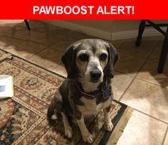Please spread the word! Jewel was last seen in Phelan, CA 92371.    Nearest Address: Near Solano Rd & Buttemere Rd
