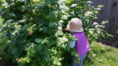 Tamarack's Community Garden is flourishing!