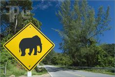 wildeles:  Elephant crossing road sign via featurePics.