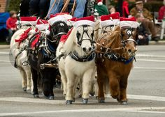 we love horses#emma-eventing.com - Can this get any cuter? Middleburg Christmas Parade.