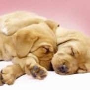 Make your link do more. Cute Dog Wallpaper, Nature Wallpaper, Wallpaper Backgrounds, Wallpaper Desktop, Cute Dog Pictures, Pet News, Sleeping Dogs, Nature Animals, Dog Care