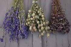 AD-H6/H7/H8 Dried Bunches