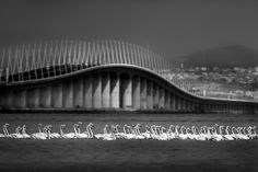 Ponte Vasco da Gama - Lisboa Lisbon Portugal, Great Photos, City, Places, Photography, Inspiration, Lisbon, Sash, Biblical Inspiration