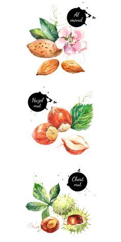 Watercolor Nuts Vector Set  -  https://www.designcuts.com/product/watercolor-nuts-vector-set/