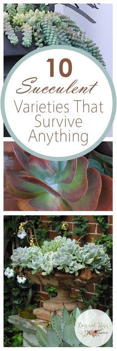 10 Succulent Varieties That Survive Anything Succulents Varieties of Succulents Easy to Grow Succulents Growing Succulents Gardening Tricks Gardening TIps Gardening 101 G. Growing Succulents, Succulents In Containers, Cacti And Succulents, Planting Succulents, Garden Care, Diy Garden, Succulent Gardening, Succulent Terrarium, Container Gardening