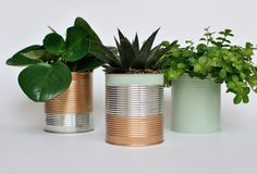 tin cans turned planters, recycling + creating a carbon sink = super Cool!