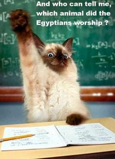 answer: CATS!   EXACTLY! THESE FURRY CREATURE WERE LITERALLY WORSHIPPED BY AN AWESOME, ANCIENT CIVILIZATION (Egypt is my fave ancient civilization for many reasons but one of the biggest reasons: they worshipped CATS!)