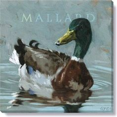 Gallery Wrap on Wood Frame ~ Mallard