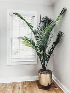 Home Design And Decor Ideas And Inspiration - Floor Plants - Ideas of Floor Plants - Gold flower pot. Potted Palm Trees, Potted Palms, Palm Tree Plant, Trees To Plant, Flowering House Plants, Palm House Plants, Living Room Plants, House Plants Decor, Bedroom Plants