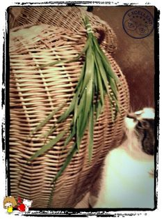 pin up bunch of grass if you cant grow it by youself. you can find right type in your area really easy. if your cat live indoor only this kind of thing is 'must be' gift.