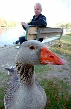 Maria the Echo Park goose (MariGos)